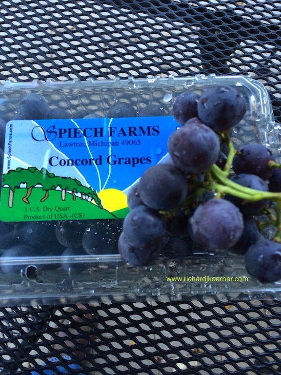 Concord Grapes-Spiech Farms-2013